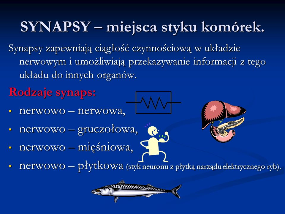 SYNAPSY – miejsca styku komórek.