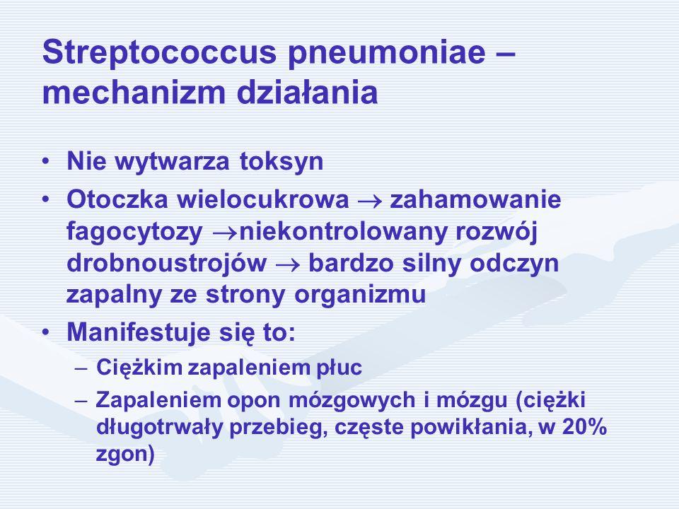 Streptococcus pneumoniae – mechanizm działania