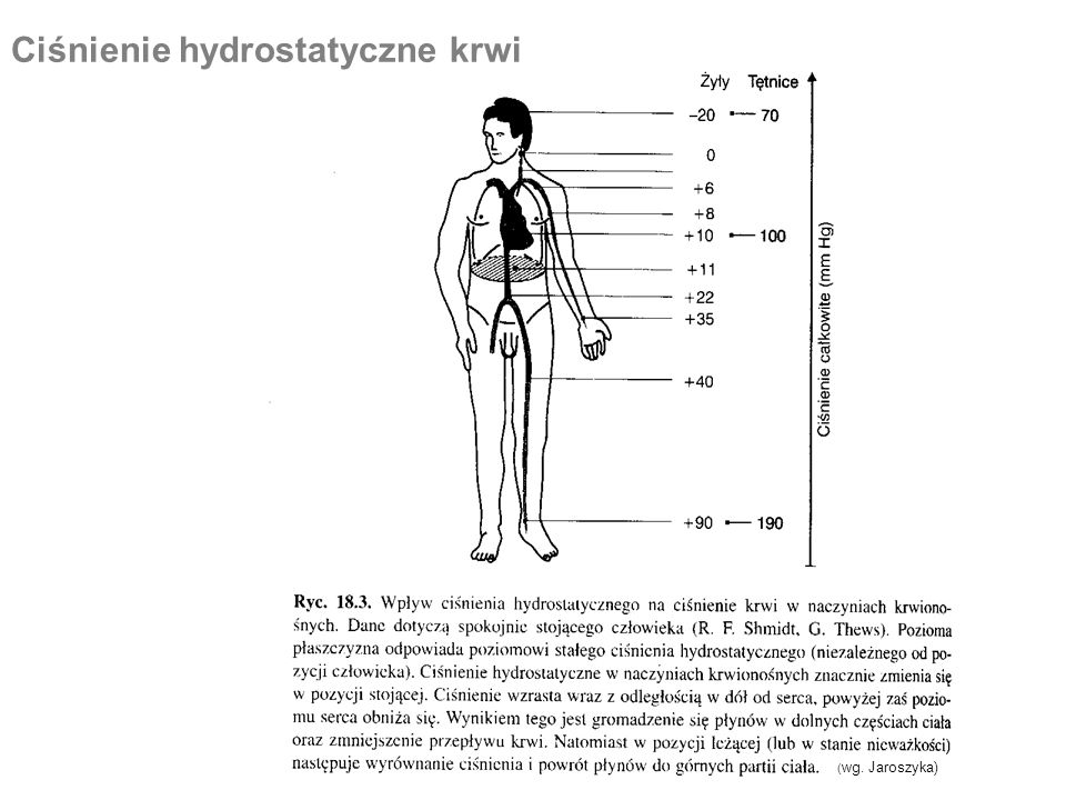 Ciśnienie hydrostatyczne krwi
