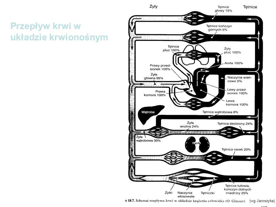 Przepływ krwi w układzie krwionośnym (wg Jaroszyka)