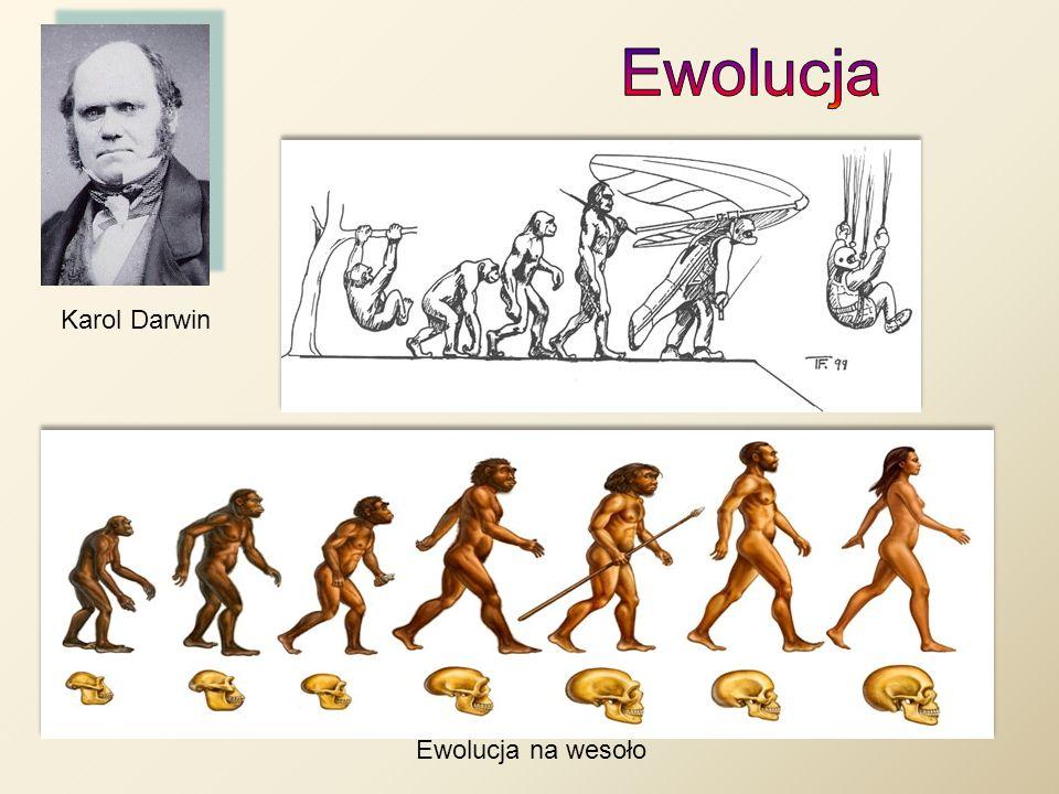 Ewolucja Karol Darwin Ewolucja na wesoło