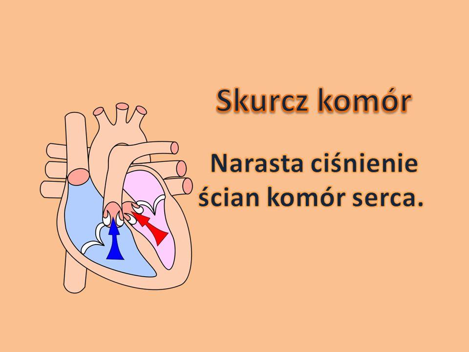 Skurcz komór Narasta ciśnienie ścian komór serca.