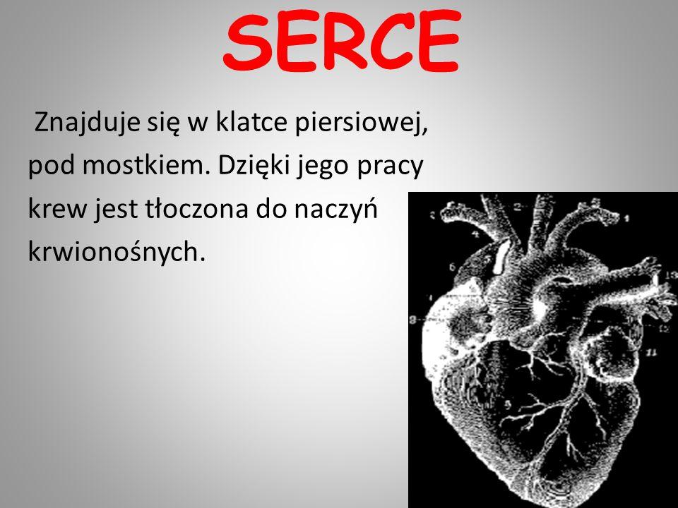 SERCE Znajduje się w klatce piersiowej, pod mostkiem.