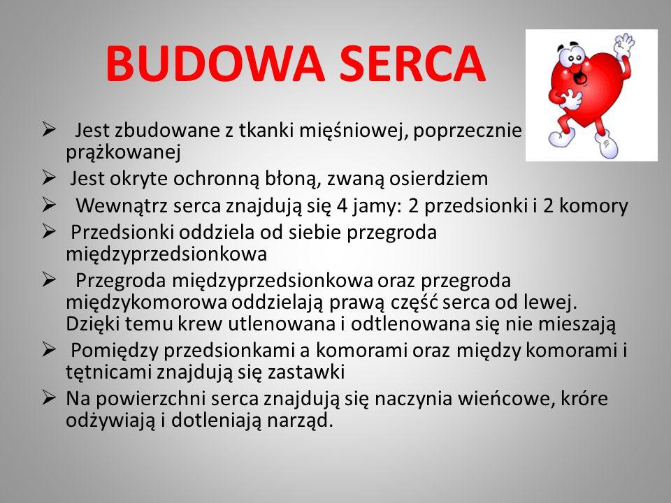BUDOWA SERCA Jest zbudowane z tkanki mięśniowej, poprzecznie prążkowanej. Jest okryte ochronną błoną, zwaną osierdziem.