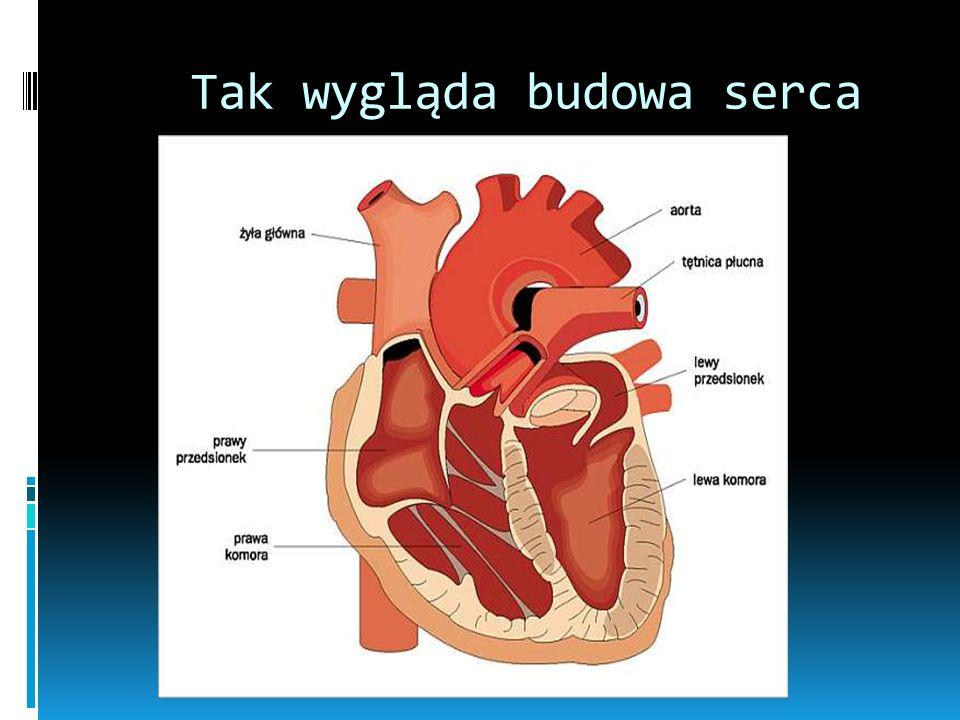 Tak wygląda budowa serca