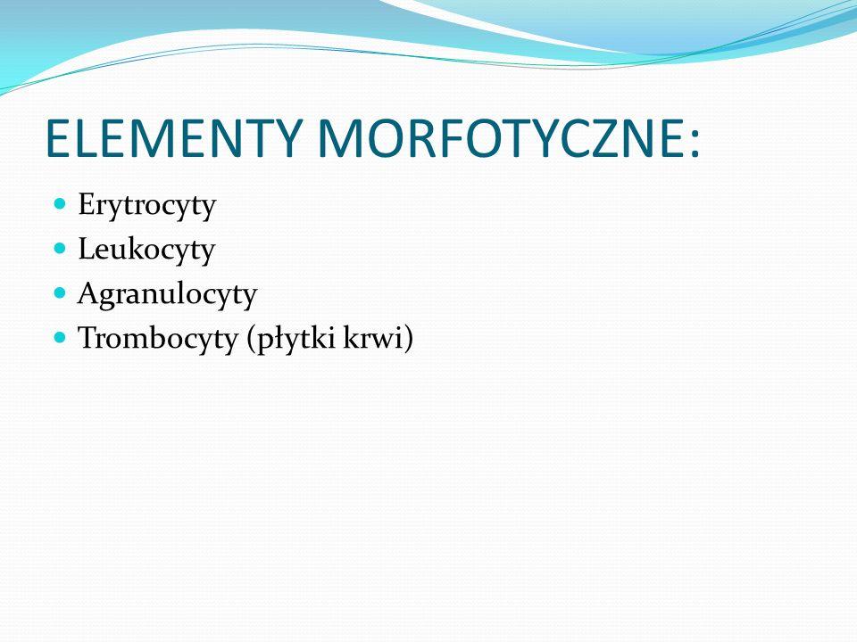 ELEMENTY MORFOTYCZNE: