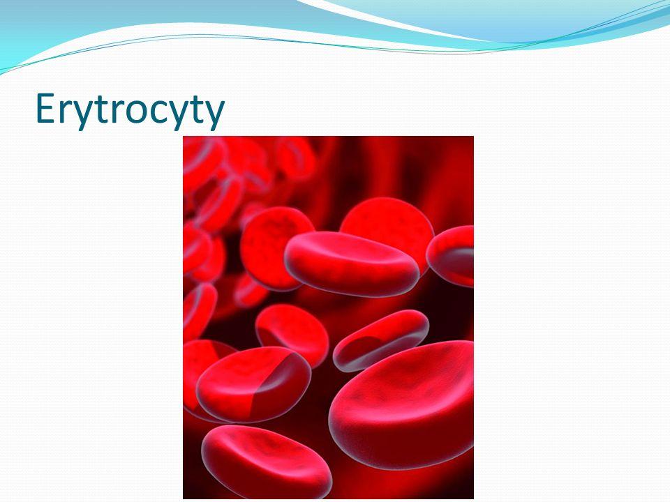 Erytrocyty