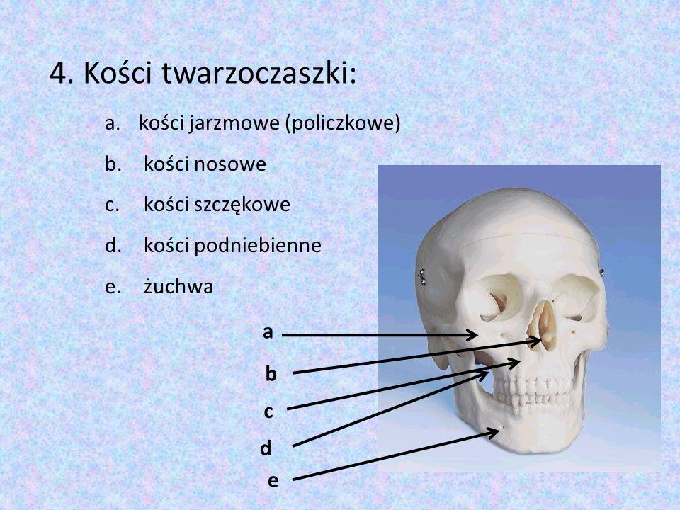 4. Kości twarzoczaszki: kości jarzmowe (policzkowe) kości nosowe