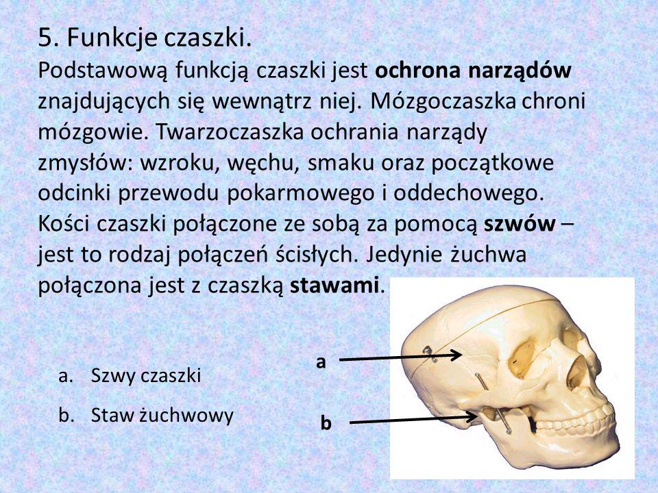 5. Funkcje czaszki.