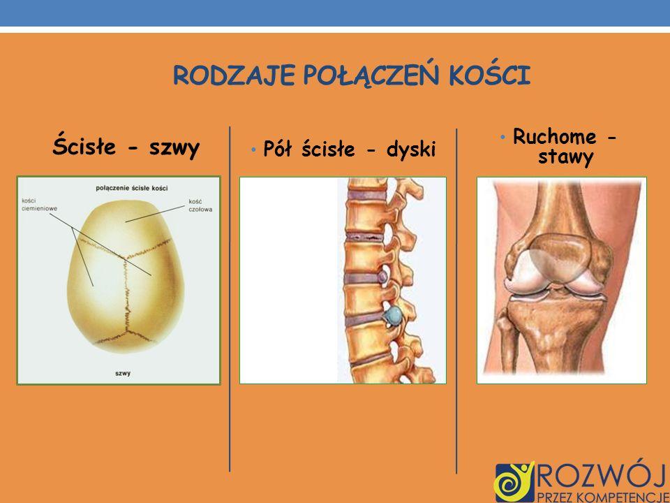 Rodzaje połączeń kości