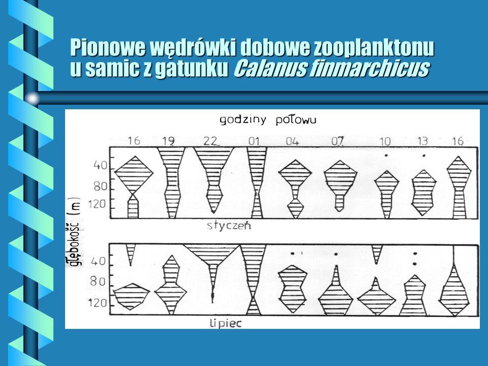 Pionowe wędrówki dobowe zooplanktonu u samic z gatunku Calanus finmarchicus