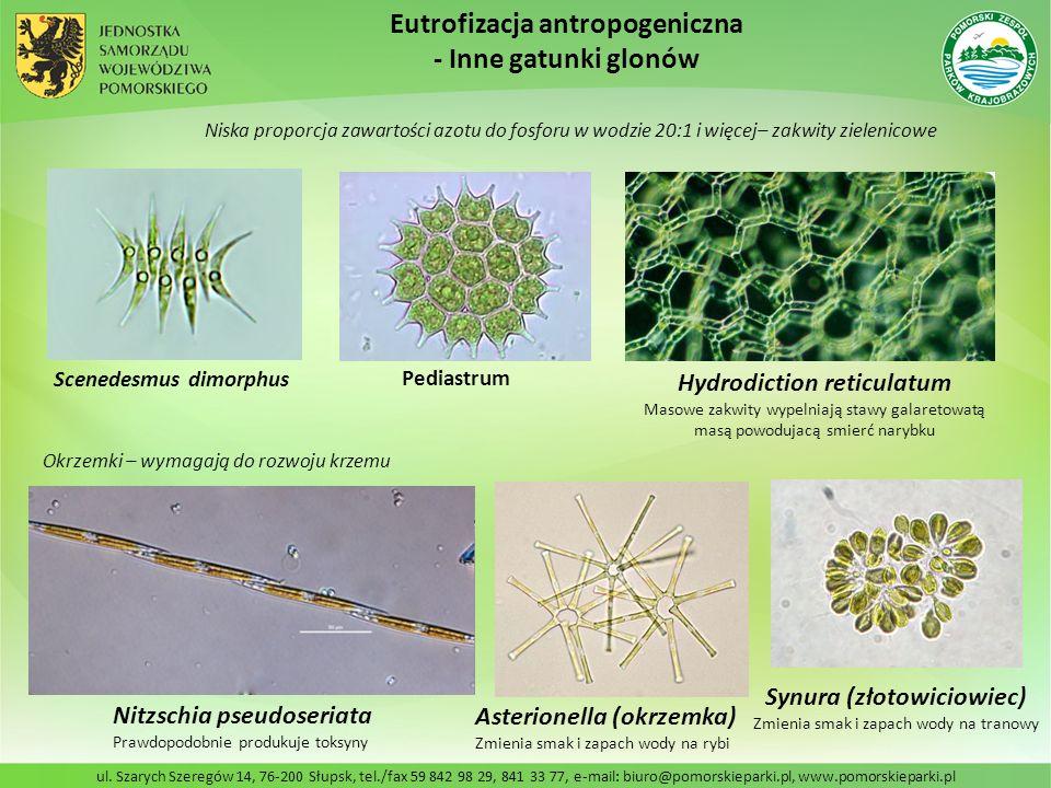 Eutrofizacja antropogeniczna - Inne gatunki glonów