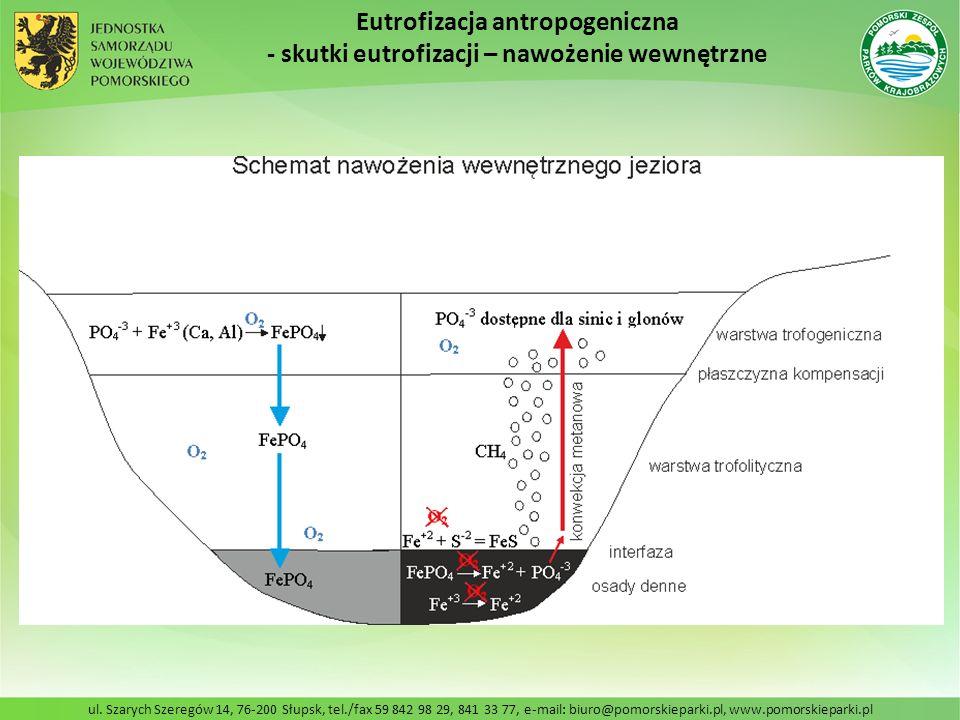 Eutrofizacja antropogeniczna