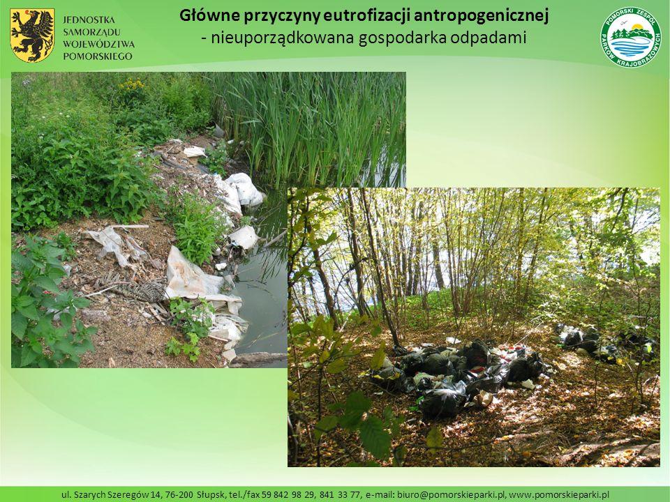 Główne przyczyny eutrofizacji antropogenicznej
