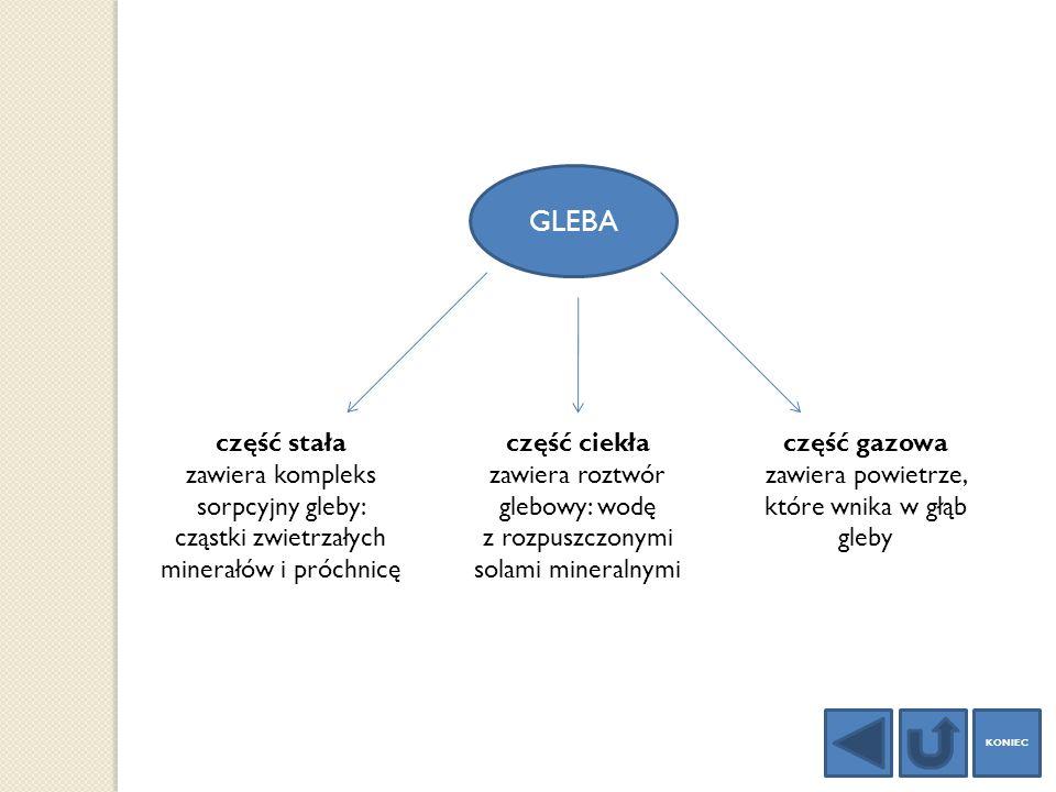 GLEBA część stała. zawiera kompleks sorpcyjny gleby: cząstki zwietrzałych minerałów i próchnicę. część ciekła.