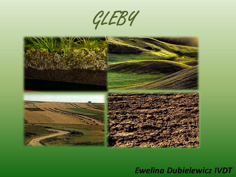 GLEBY Ewelina Dubielewicz IVDT