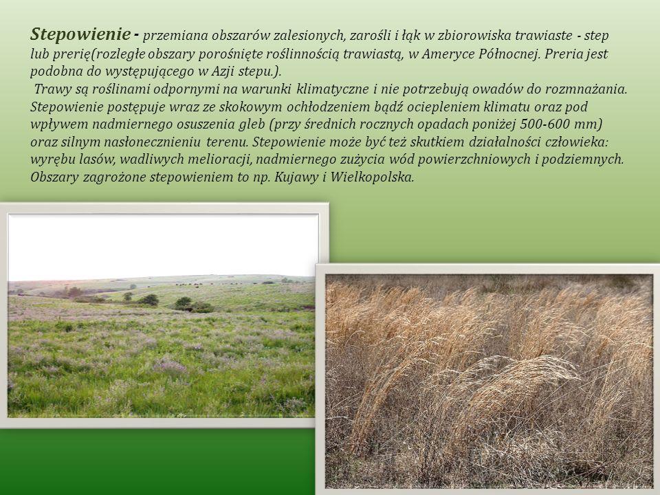 Stepowienie - przemiana obszarów zalesionych, zarośli i łąk w zbiorowiska trawiaste - step lub prerię(rozległe obszary porośnięte roślinnością trawiastą, w Ameryce Północnej. Preria jest podobna do występującego w Azji stepu.).