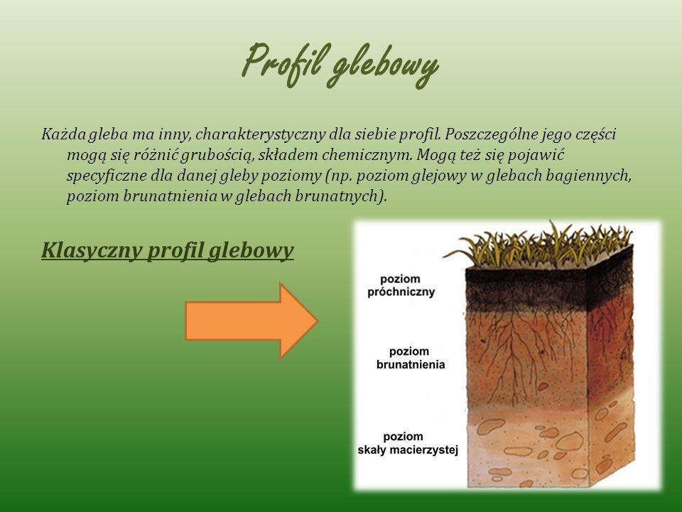 Profil glebowy Klasyczny profil glebowy