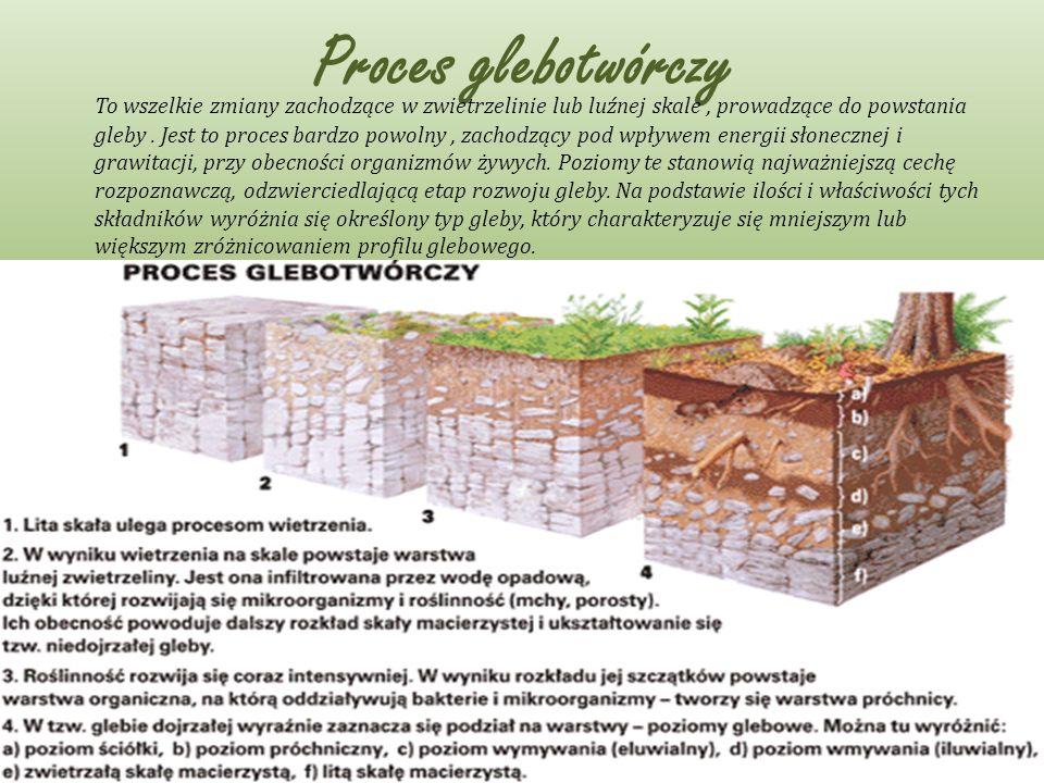 Proces glebotwórczy