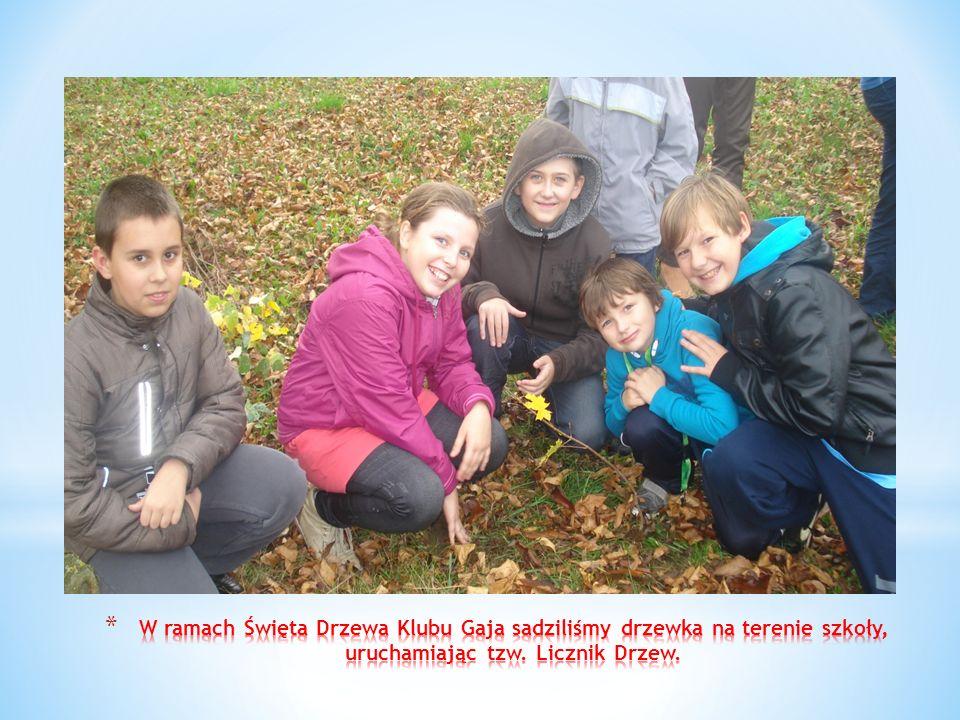 W ramach Święta Drzewa Klubu Gaja sadziliśmy drzewka na terenie szkoły, uruchamiając tzw.