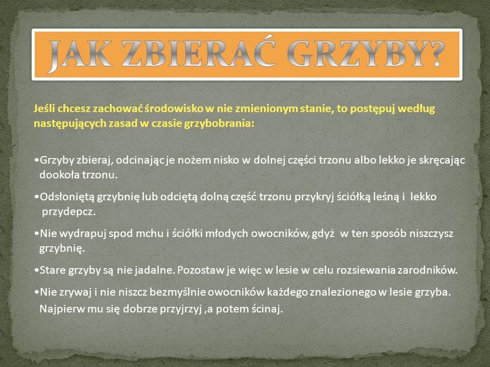JAK ZBIERAĆ GRZYBY Jeśli chcesz zachować środowisko w nie zmienionym stanie, to postępuj według następujących zasad w czasie grzybobrania: