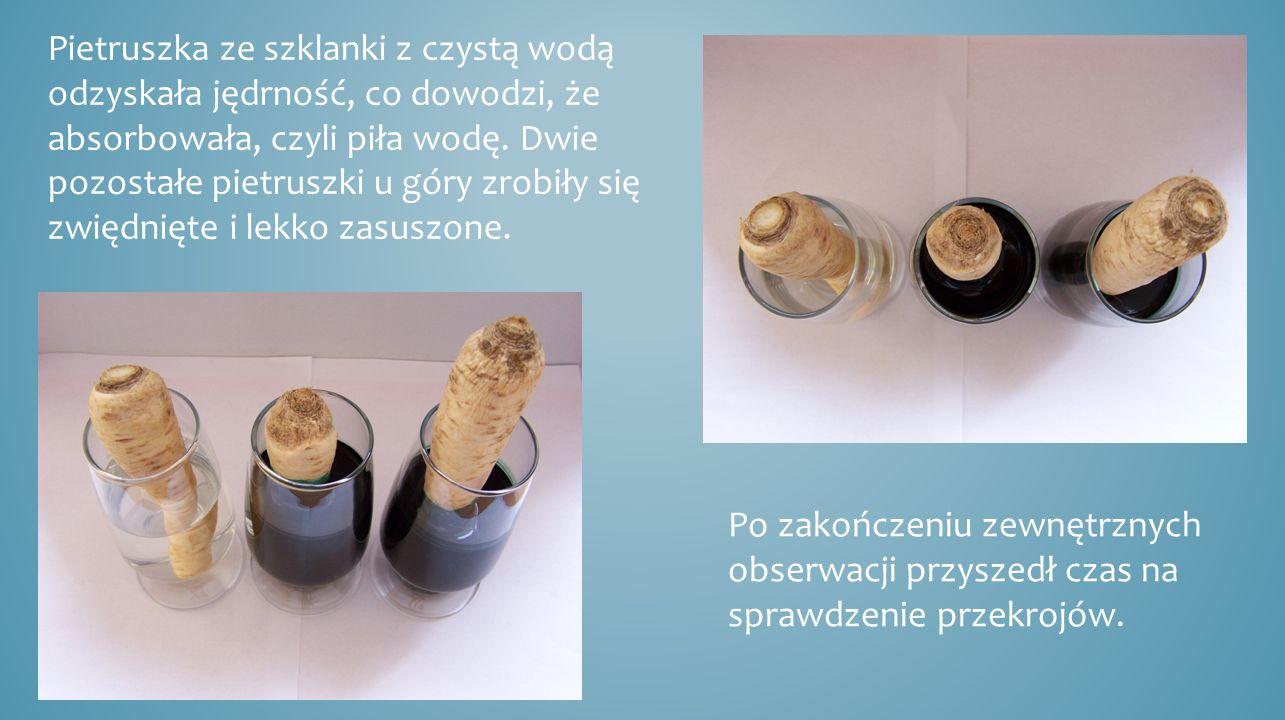 Pietruszka ze szklanki z czystą wodą odzyskała jędrność, co dowodzi, że absorbowała, czyli piła wodę. Dwie pozostałe pietruszki u góry zrobiły się zwiędnięte i lekko zasuszone.