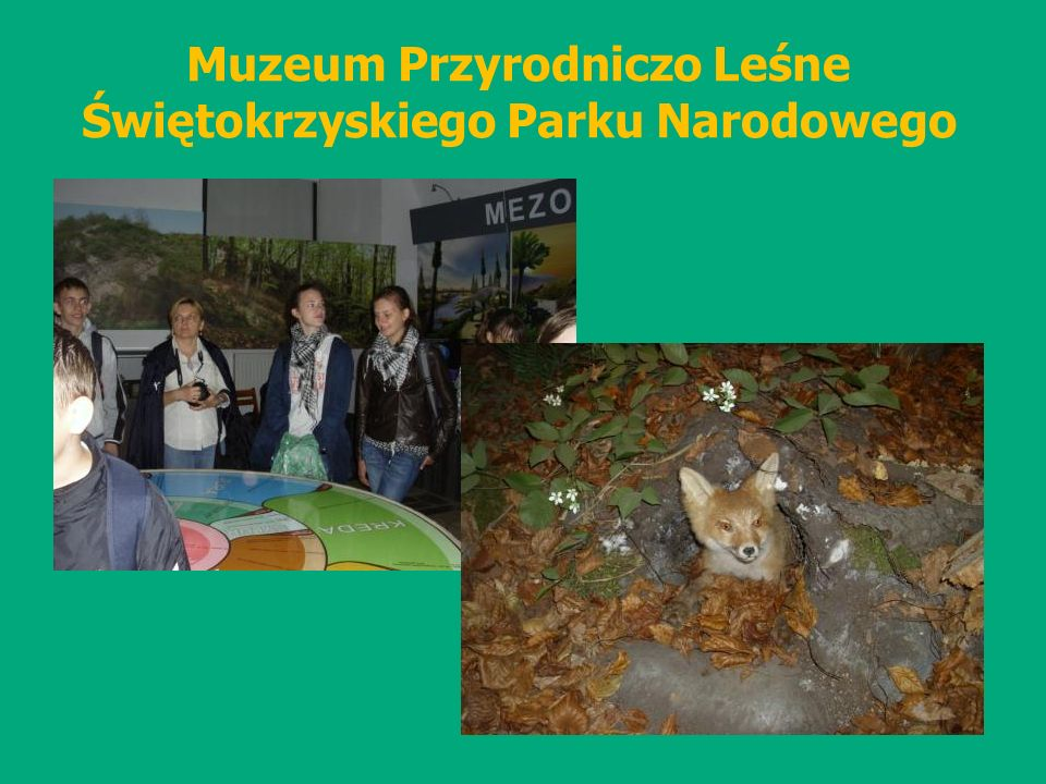 Muzeum Przyrodniczo Leśne Świętokrzyskiego Parku Narodowego