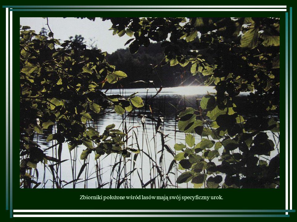 Zbiorniki położone wśród lasów mają swój specyficzny urok.