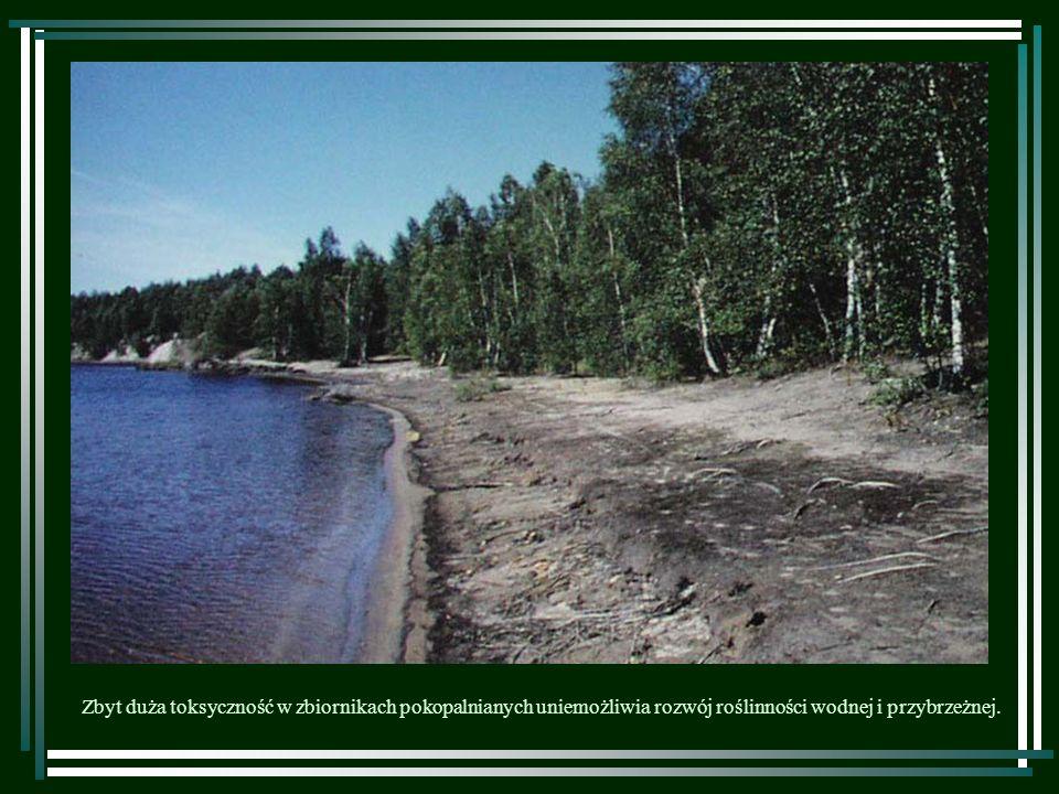 Zbyt duża toksyczność w zbiornikach pokopalnianych uniemożliwia rozwój roślinności wodnej i przybrzeżnej.