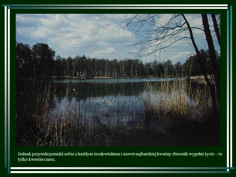 Jednak przyroda poradzi sobie z każdym środowiskiem i nawet najbardziej kwaśny zbiornik wypełni życie – to tylko kwestia czasu.