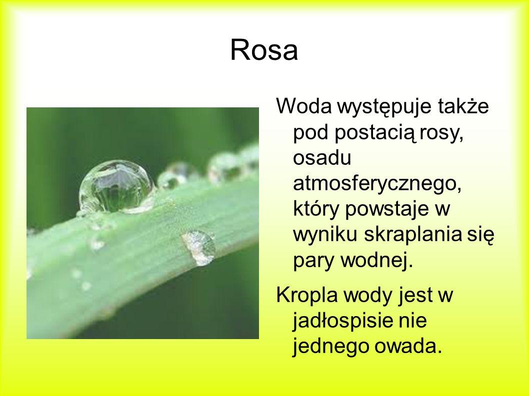 Rosa Woda występuje także pod postacią rosy, osadu atmosferycznego, który powstaje w wyniku skraplania się pary wodnej.