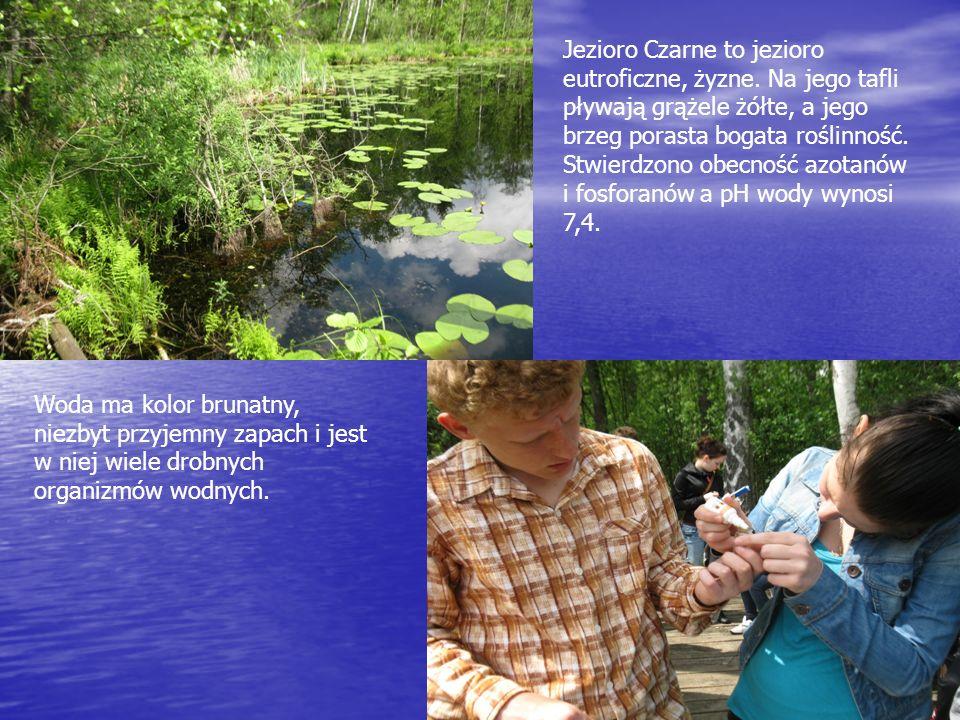 Jezioro Czarne to jezioro eutroficzne, żyzne