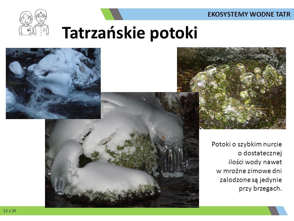 Tatrzańskie potoki EKOSYSTEMY WODNE TATR