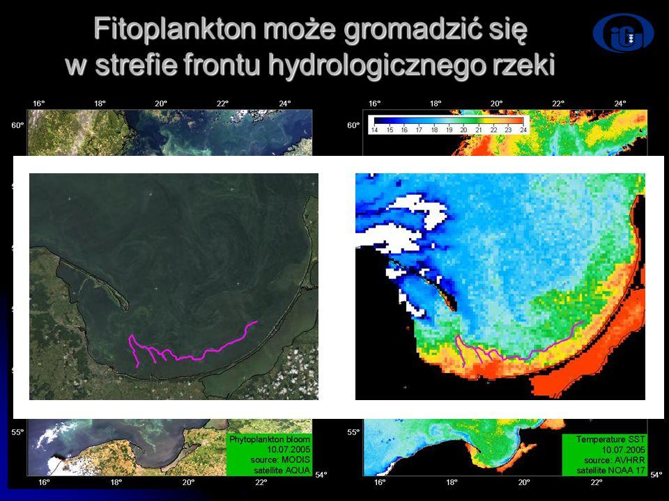 Fitoplankton może gromadzić się w strefie frontu hydrologicznego rzeki