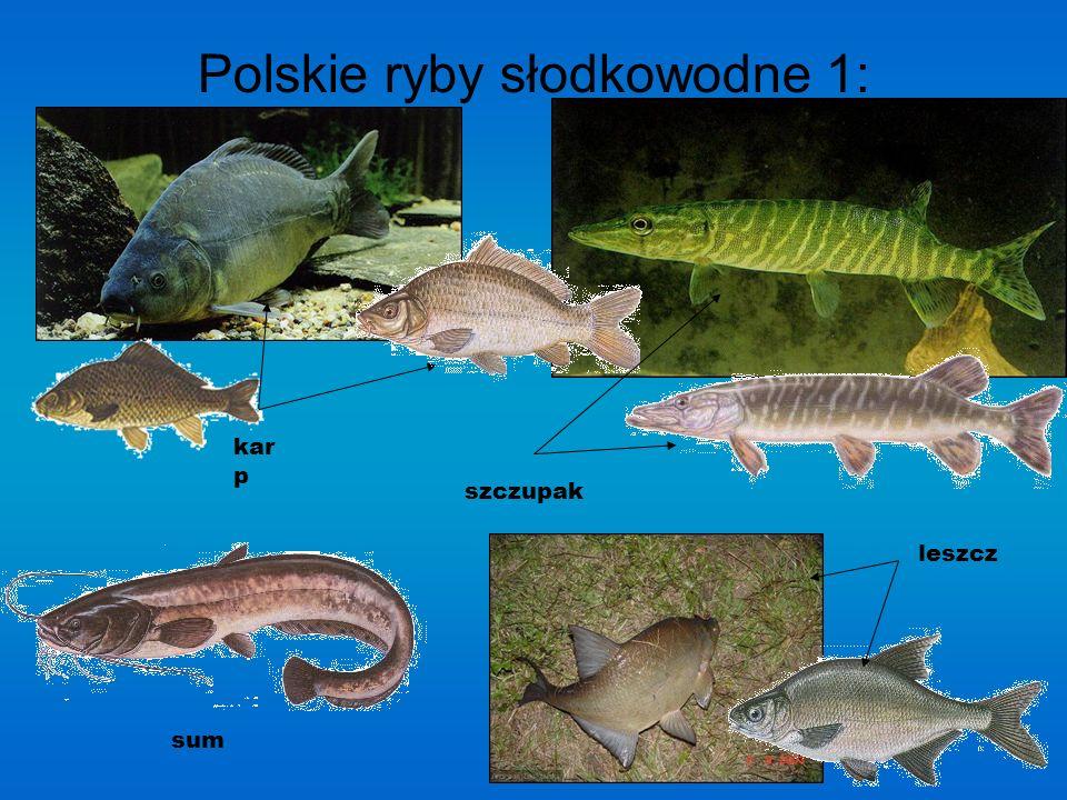 Polskie ryby słodkowodne 1: