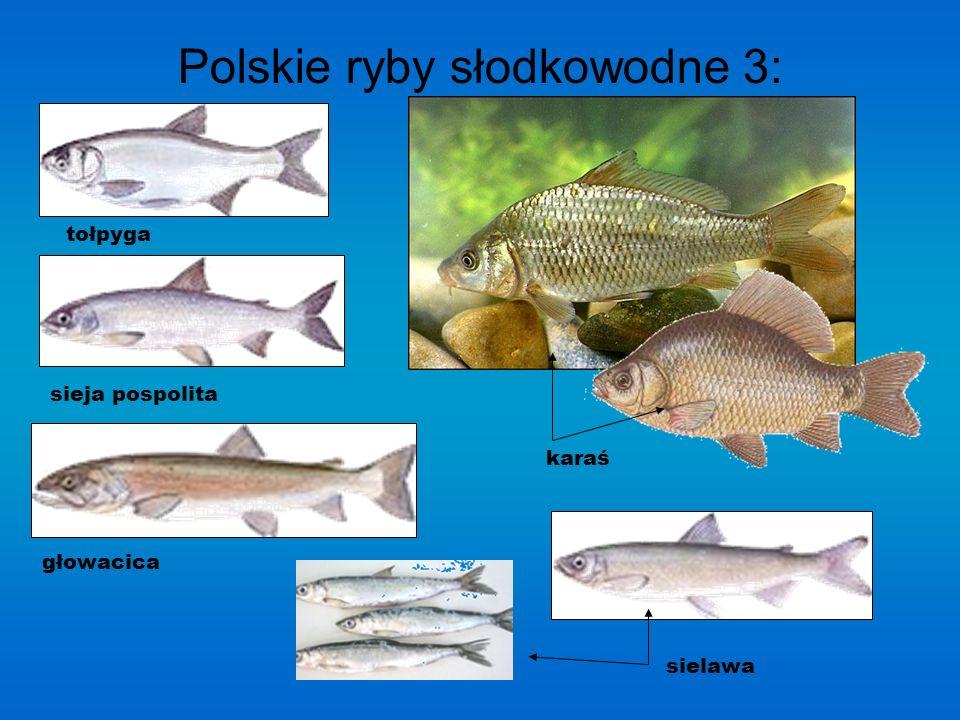 Polskie ryby słodkowodne 3: