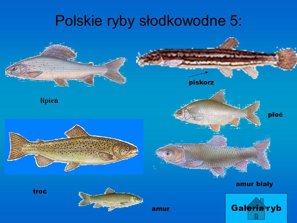 Polskie ryby słodkowodne 5:
