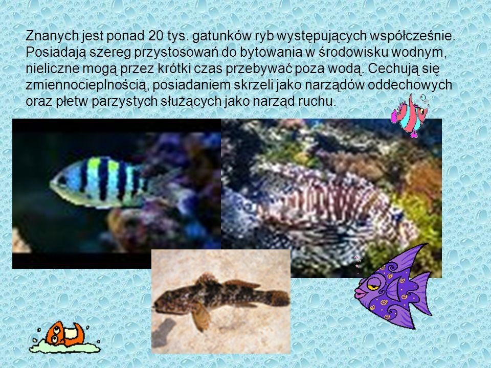 Znanych jest ponad 20 tys. gatunków ryb występujących współcześnie