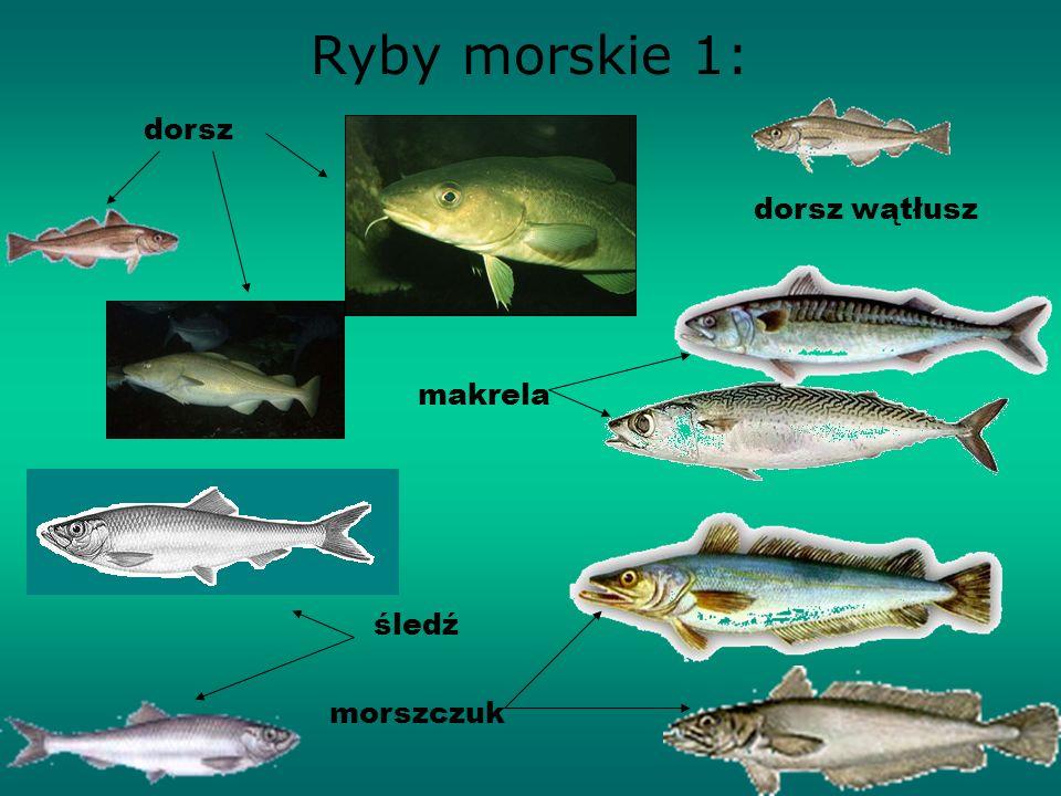 Ryby morskie 1: dorsz dorsz wątłusz makrela śledź morszczuk