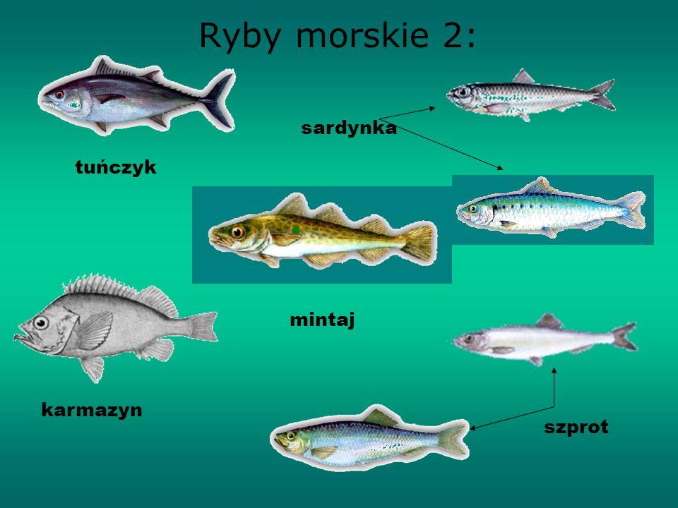 Ryby morskie 2: sardynka tuńczyk mintaj karmazyn szprot