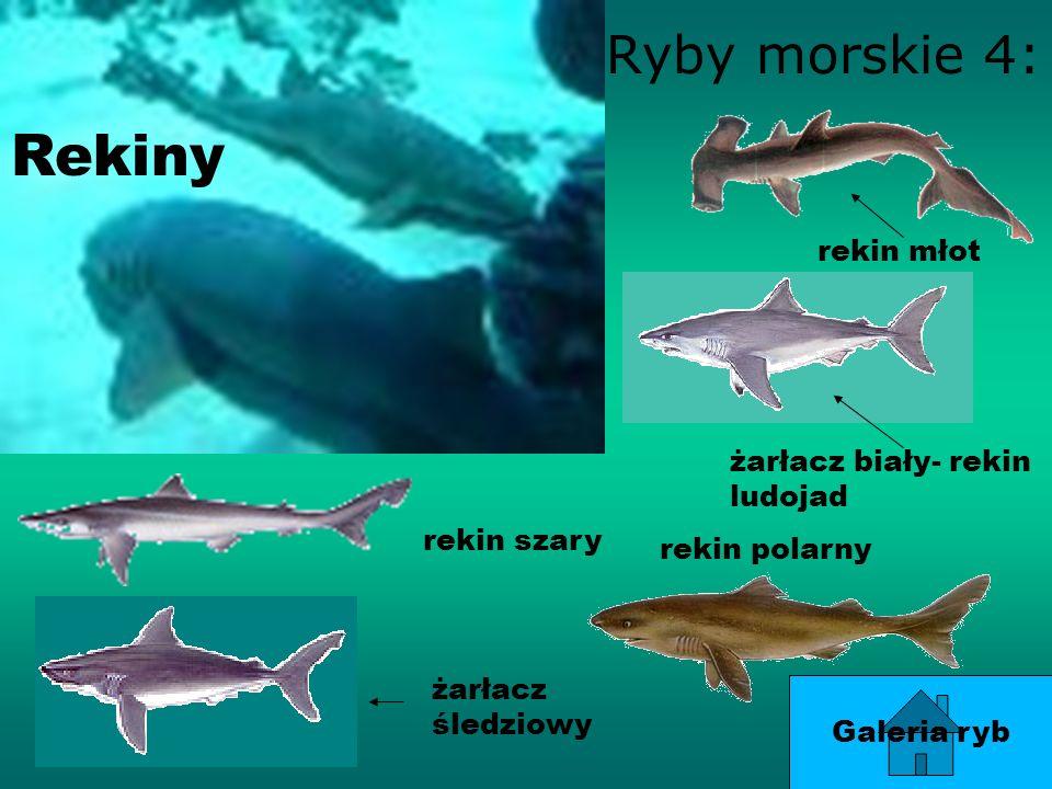Rekiny Ryby morskie 4: rekin młot żarłacz biały- rekin ludojad