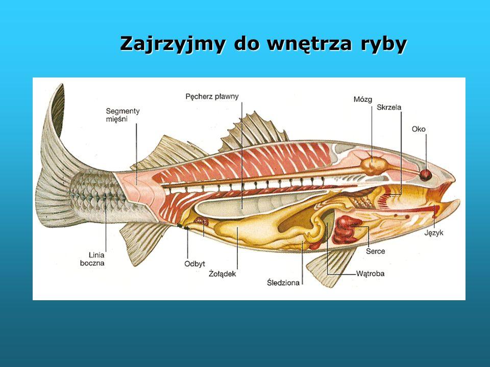 Zajrzyjmy do wnętrza ryby