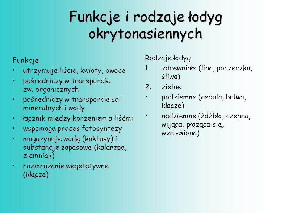 Funkcje i rodzaje łodyg okrytonasiennych