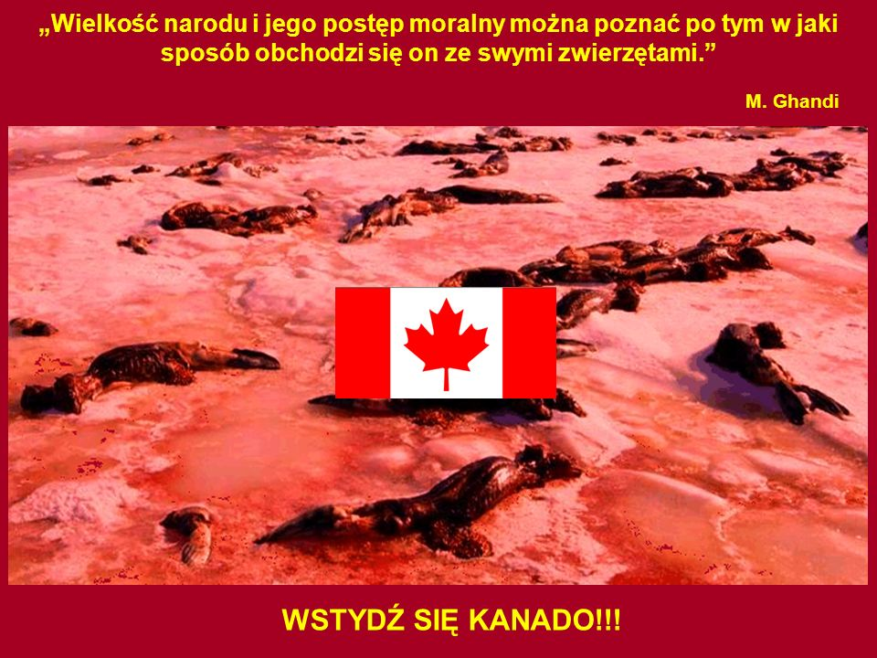 M. Ghandi WSTYDŹ SIĘ KANADO!!!