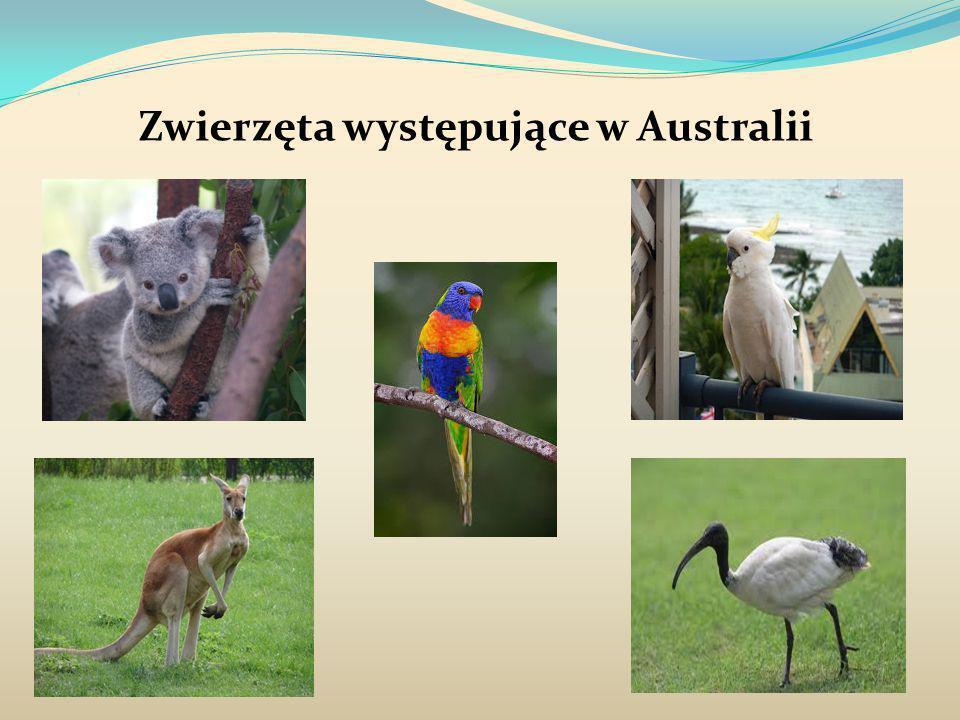 Zwierzęta występujące w Australii