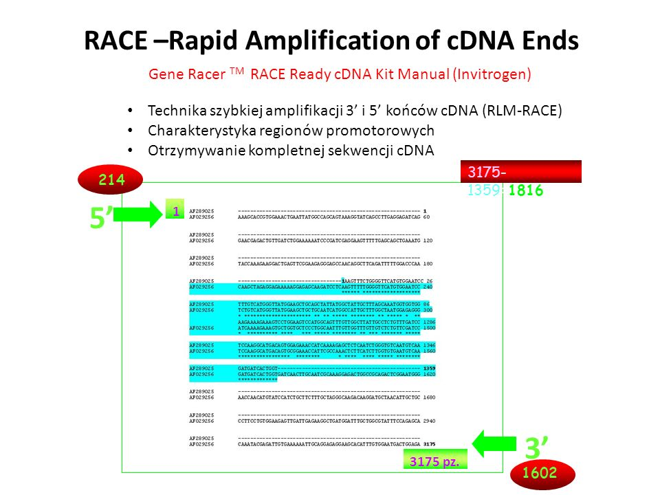 RACE –Rapid Amplification of cDNA Ends