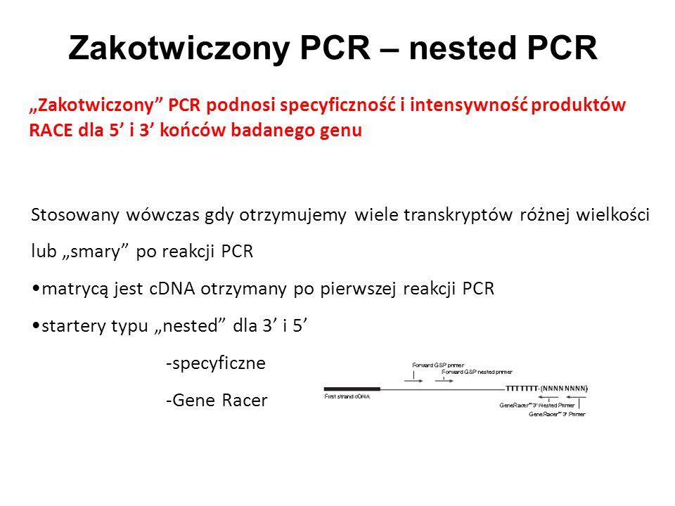 Zakotwiczony PCR – nested PCR