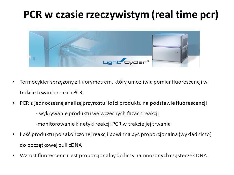 PCR w czasie rzeczywistym (real time pcr)
