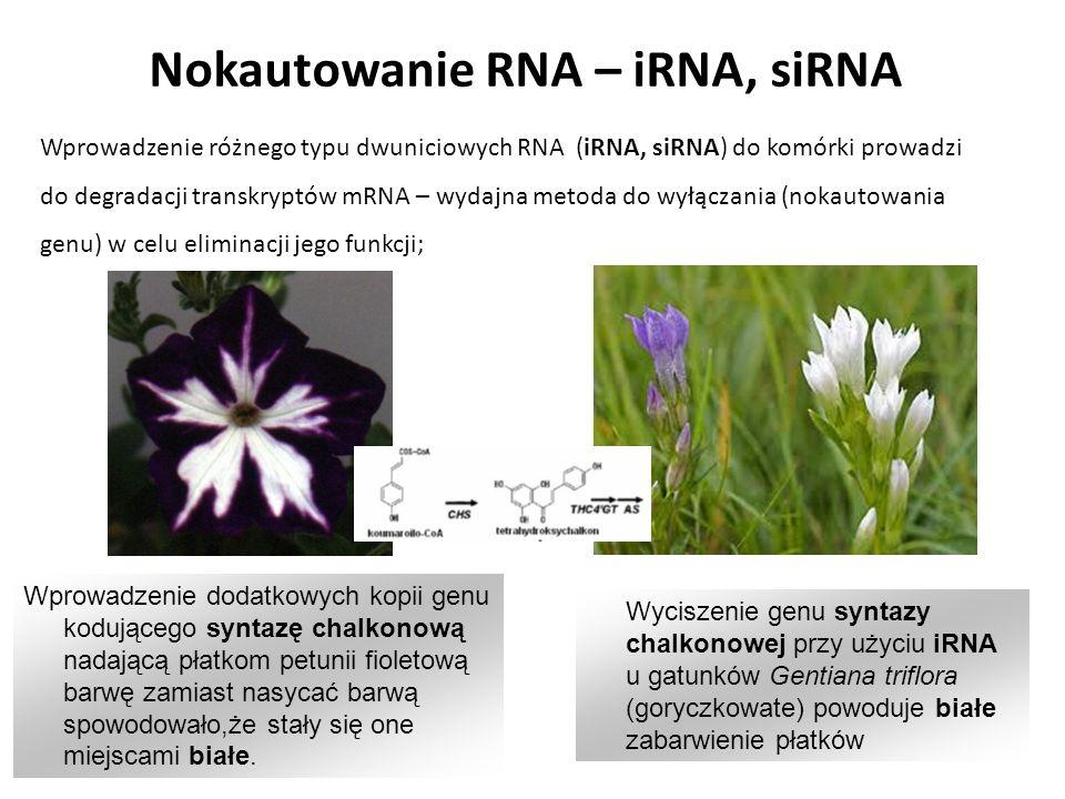 Nokautowanie RNA – iRNA, siRNA