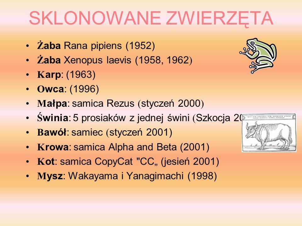 SKLONOWANE ZWIERZĘTA Żaba Rana pipiens (1952)